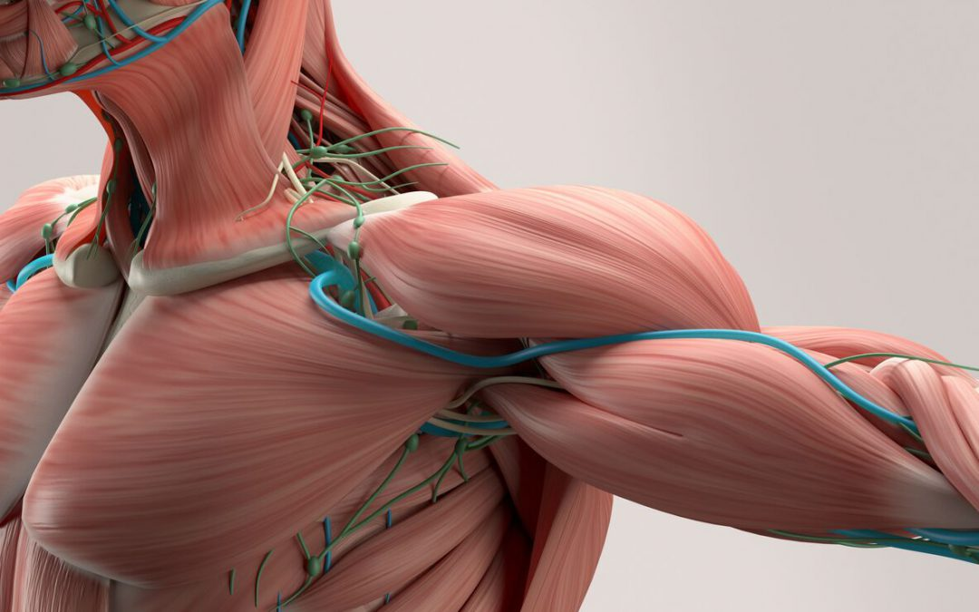 What We Know About Blood Flow Restriction Training