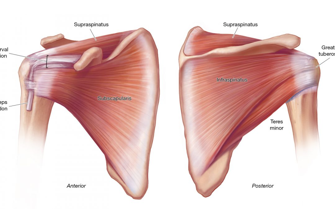 Is Early Physical Therapy Safe After a Rotator Cuff Repair?